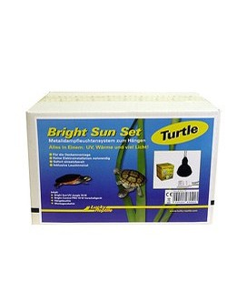 Bright Sun Set -Turtle