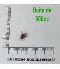 Mouches Aptères