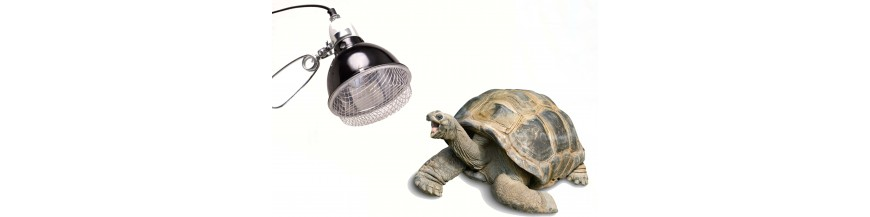 MATERIEL TORTUES