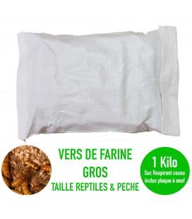 VERS DE FARINE (Gros) 1 Kg
