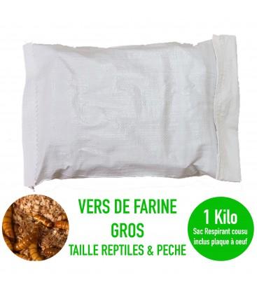 VERS DE FARINE (Gros) 1 Kg (pour la pêche)