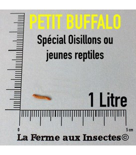 insecte reptile, insectes oiseaux, vers buffalo