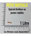 insecte reptile, insectes oiseaux, vers buffalo
