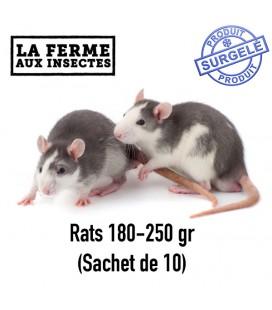 Ecopack rats 180-250g par 10