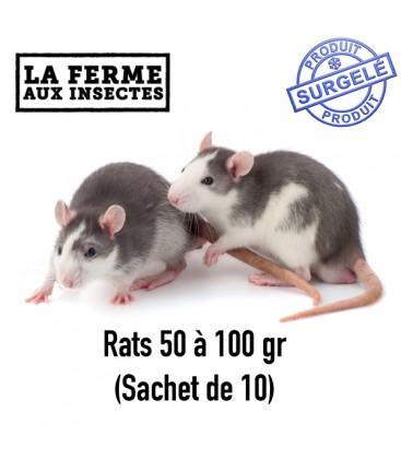 Ecopack rats 50-100g par 10 pour serpent et reptile
