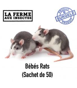 Ecopack bébé rats par 50 pour serpent et reptile