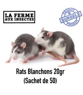 Ecopack rats 20g (Sachet de 50)