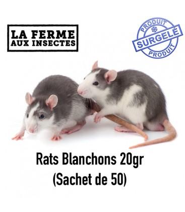 Ecopack rats 20g (Sachet de 50) rats pour reptile et serpent