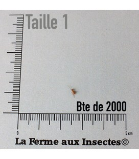 Grillons D Micros (Taille 3)