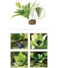 SMART PLANT BROMELIA LARGE