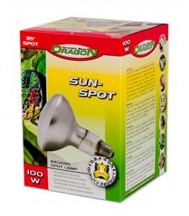 SUN SPOT 100W (DRAGON)