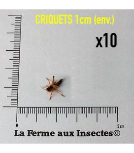 Criquets 1cm
