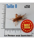 Grillons D Adultes (Taille 8)