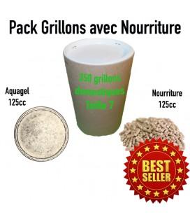 Pack grillons domestiques vivants : 350 GRILLONS vivants subadultes T7 L + 1 Aquagel 125cc + 1 pot nourriture Grillons 125cc