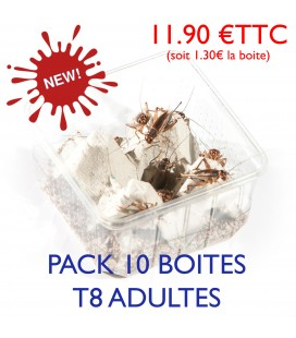 Grillons Domestiques Adultes T8 (Pack 10 Boites)