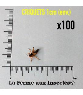 Criquets 2 cm (Carton de 100)