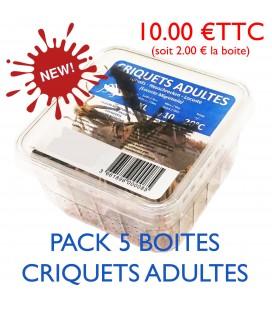 CRIQUETS ADULTES (pack 5 boites)