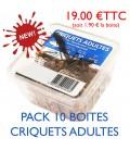 CRIQUETS ADULTES (pack 10 boites)