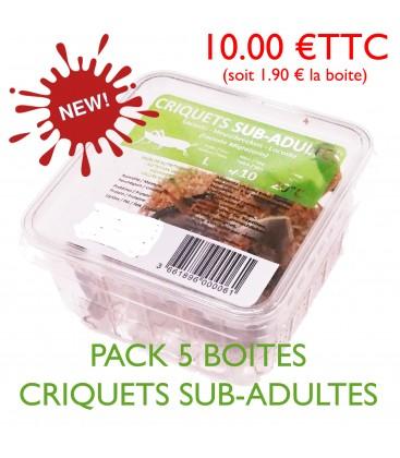 CRIQUETS SUB-ADULTES (pack 5 boites)
