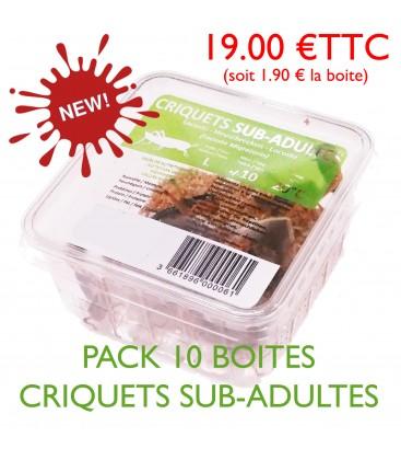 CRIQUETS SUB-ADULTES (pack 10 boites)
