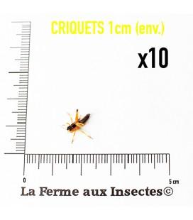 Criquets 1cm (Boite)