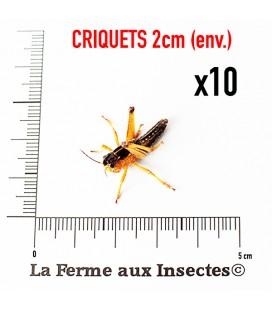 Criquets 2cm