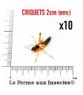 Criquets 2cm (boite)