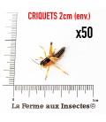 Criquets 2 cm (Carton de 50)