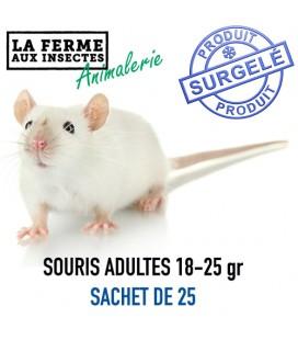 Ecopack souris adultes 18-24g par 25