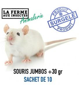 Ecopack souris sauteuses 11-17g