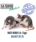 BEBES DE RATS SACHET DE 25 PIECES