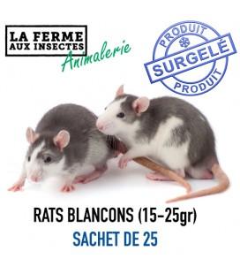 BLANCHONS DE RATS 20gr SACHET DE 25