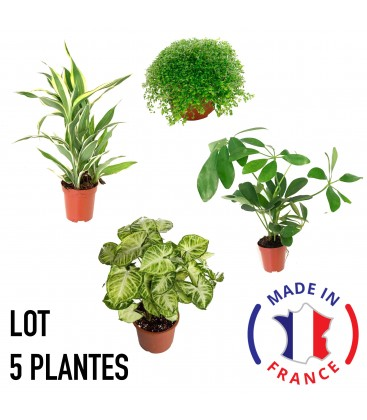 5 PLANTES DE TERRARIUM