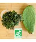 Pack Plantes tortues Terrestres (1 calissia + 1 Raquette figuier)