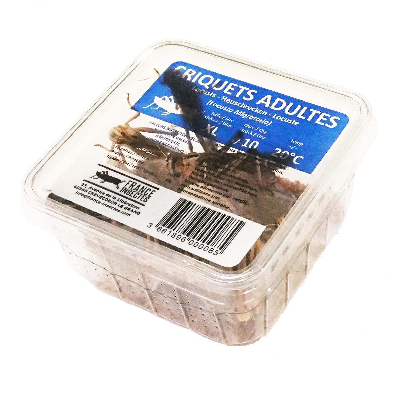 Boite criquets migrateurs ADULTES
