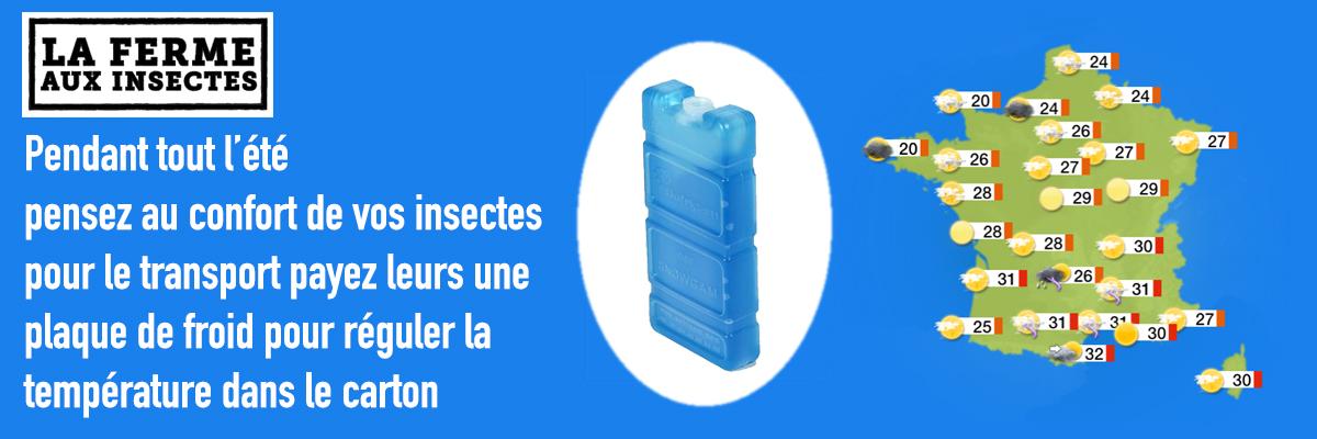 BANNIERE-precaution-t-